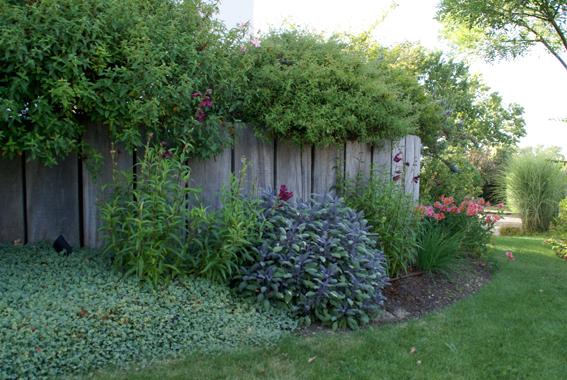 09 les v g taux du jardin aubry paysage paysagiste for Entretien jardin 53